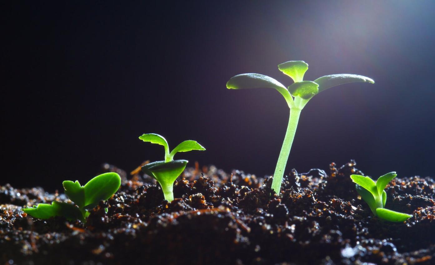 aspectos más importantes y factores para que las plantas crezcan