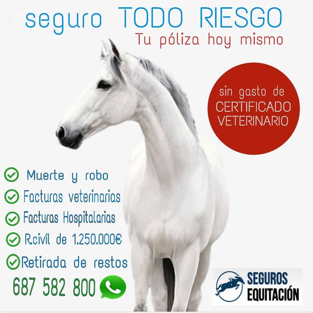 seguros para caballos con cobertura mundial
